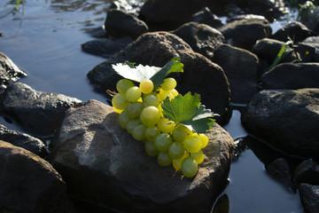 Weintrauben bei Morgensonne auf einem Stein in Wasser