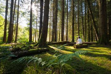 forêt enfant mousse fantastique lumière arbre sapin seul solitude perdu nature bois grand