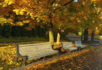 Park with bench on alley in autumn