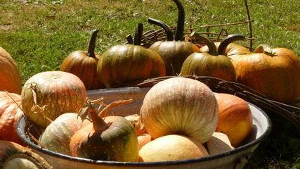 pumpkin in front of meadow