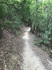 Hiking Trail Outdoor at Pine Mountain Trail Georgia - Adobe Stock Photo 04