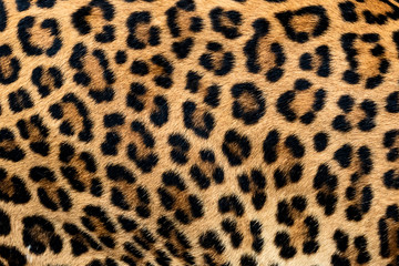 Detail skin of leopard. Wall mural