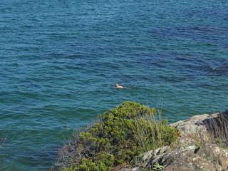 swimming by beautiful coastal Maine