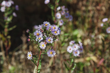 Wildflowers on blurred background