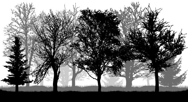 Silhouettes of bare trees and firs . Autumn park (forest), vector