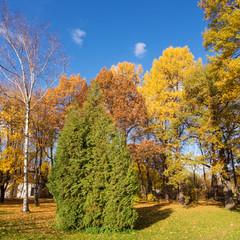 sunny park with autumn trees