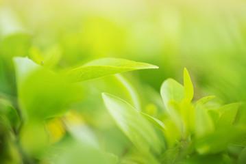 green leaf in bright sunlight freshness background