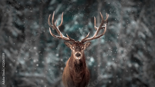 Wall mural Noble deer male in winter snow forest. Artistic winter christmas landscape.