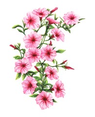 drawing by hand markers pink petunia blossoms
