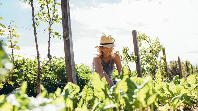Young woman doing farming