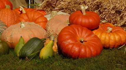 Different pumpkin in front of straw