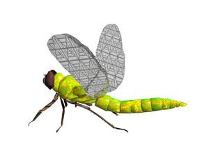 Gelb grüne Libelle