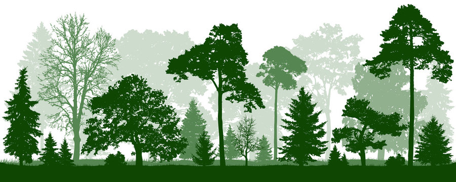 Forest green trees silhouette. Nature, park, landscape. Isolated, seamless, vector background