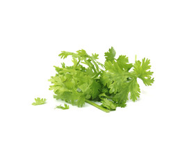 coriander isolated on white background with clipping part
