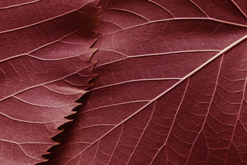 Macro image of red leaves, natural background