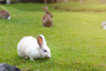 Calm and sweet little white rabbit sitting on green grass, cute bunny