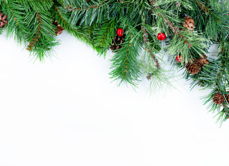 Christmas tree evergreen branches on a white background