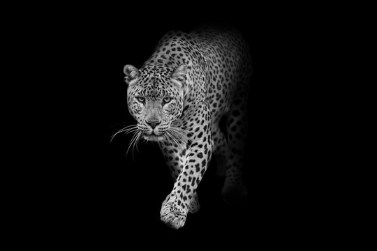 leopard wildlife animal interior art collection