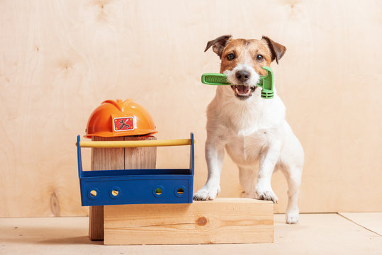 Dog as amusing builder holding hammer in mouth standing near hardhat