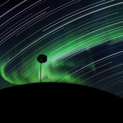 Landscape with lonely tree at night. Vector illustration with silhouette of maple on hill. Rotation of stars. Northern lights in starry sky. Colorful aurora borealis