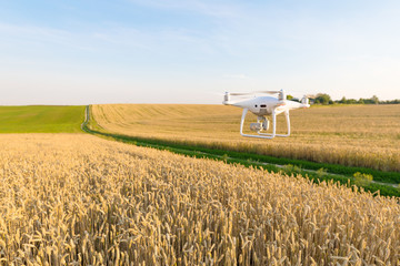 Wall Mural - drone quad copter on yellow corn field