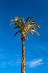 High palm tree in blue sunny sky