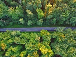 Aerial view on asphalt road hidden in green forest.