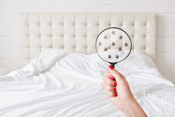 Insanitation concept. Woman holds lens, shows there are bugs in bedclothes, detects bad insects demonstrates dirty conditions. Dirtiness, unhygienic conditions and uncleanness