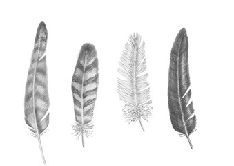 Birds feathers pencil drawing