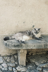 Grey and black cat lying on a stone bench in a medieval french village