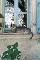 Grey cat lying on a old blue window in a medieval french village