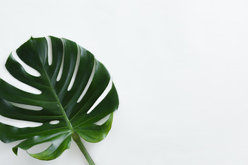 Tropical leaves Monstera on white background with copy space. Flat lay, top view