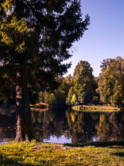 Autumn trees on the shore of a pond in a park in sunny clear weather in autumn