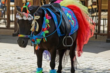 brown pony in colorful bright harness and unicorn dress in the street