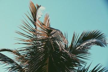 Palm Tree Crown Leafs