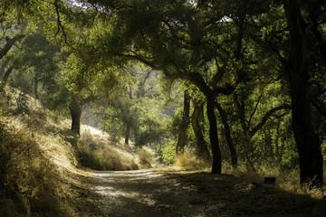 Hiking in the oaks