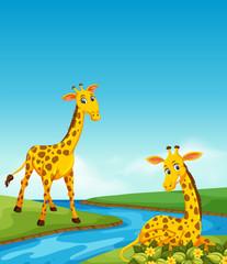 Giraffe living in next to river