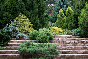 Garden design hillside. Various breeds of coniferous trees grown on artificial hills in botanic garden.