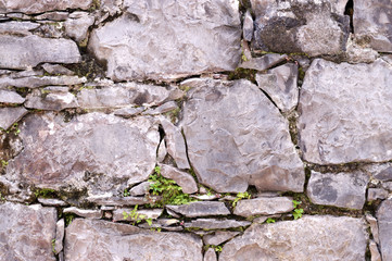 rock wall with little green leaves