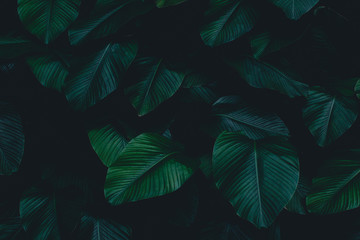 Dark botanical background tropical leaves faded bg