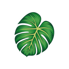 Tropical Leaf Monstera Plant isolated vector illustration