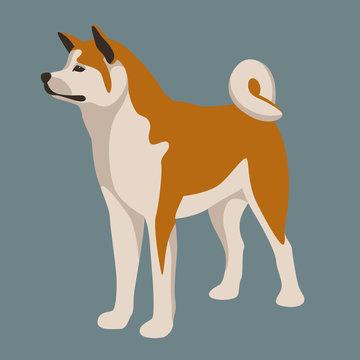 akita inu dog vector illustration  flat style  profile