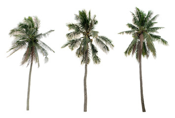Three Palm coconut the garden isolated on white background