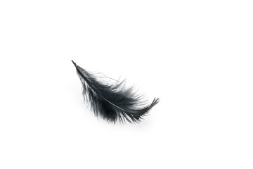 Black bird feather on white background