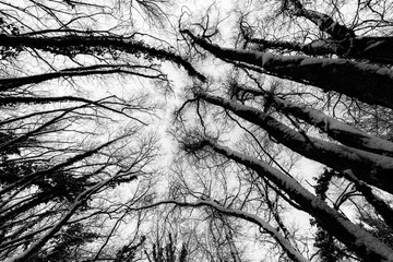 A wide angle view of trees from below, with branches creating textures