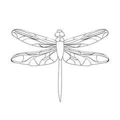 insect dragonfly sketch