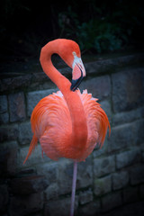 In de dag Flamingo Flamingo