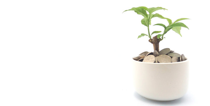 Money savings concept. Tree grows in small pot filled with coins on solid white background.