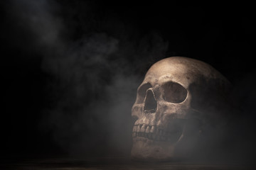 human skull in Halloween concept, vintage filter image