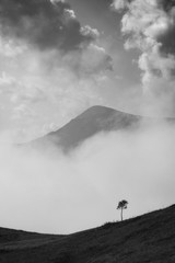 Lonely young tree on a hill against mountain peak
